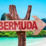 Бермудские буревестники и другие обитатели островов